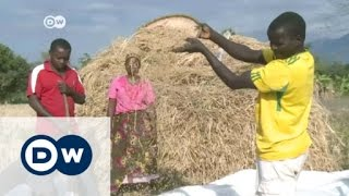 New incentives for Tanzania's rice farmers | Africa on the move