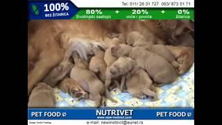 Funny dogs & NUTRIVET zdrava hrana za pse i mačke (16)