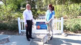 Life Unleashed - Early Puppy Education