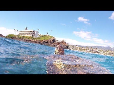 Best Snorkeling Spot In Maui!