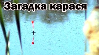 Карась под поплавком: отчёт о рыбалке в мае(Здравствуйте! В этот раз я решил половить карасей, которых с успехом ловил в прошлом году на карьере Л. Рыба..., 2016-05-15T09:51:16.000Z)
