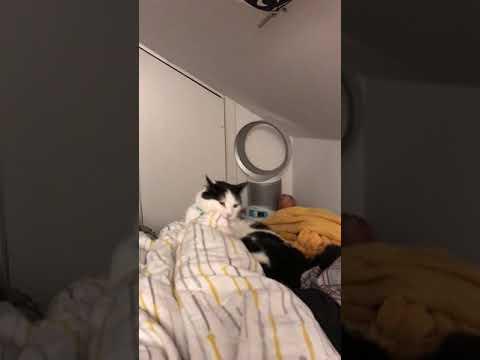 Funny cat attack's feet