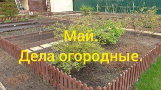 🌱🥕🧅Май.Дела огородные.