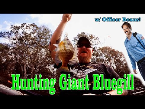 Hunting Huge Bluegill!......Broke Yakin Bluegill Fishing