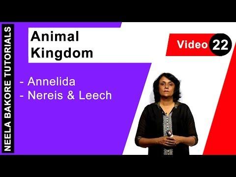 Animal Kingdom - Annelida - Nereis & Leech
