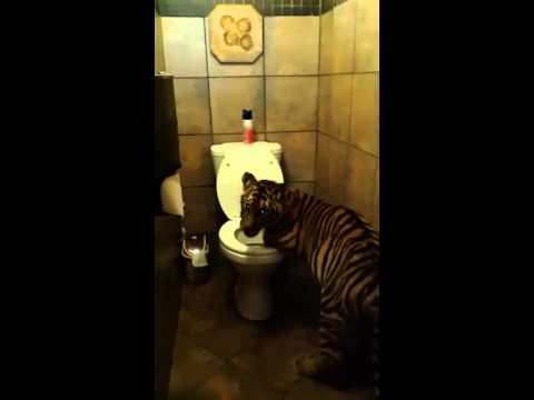 Tiger Toilet Accessoires : Tiger hochwertige bad accessoires linie bold