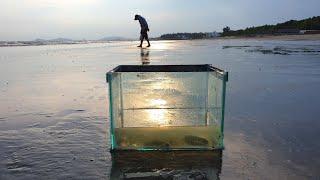 Đi câu tôm tích - Phần 1 (Catching Mantis Shrimps - Part 1)