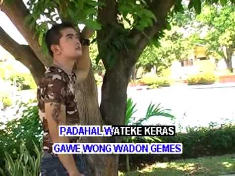 lanang kobra (Rancahan city)
