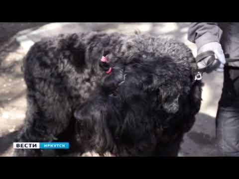 Уровень самоизоляции в Иркутске определяют с помощью видеокамер