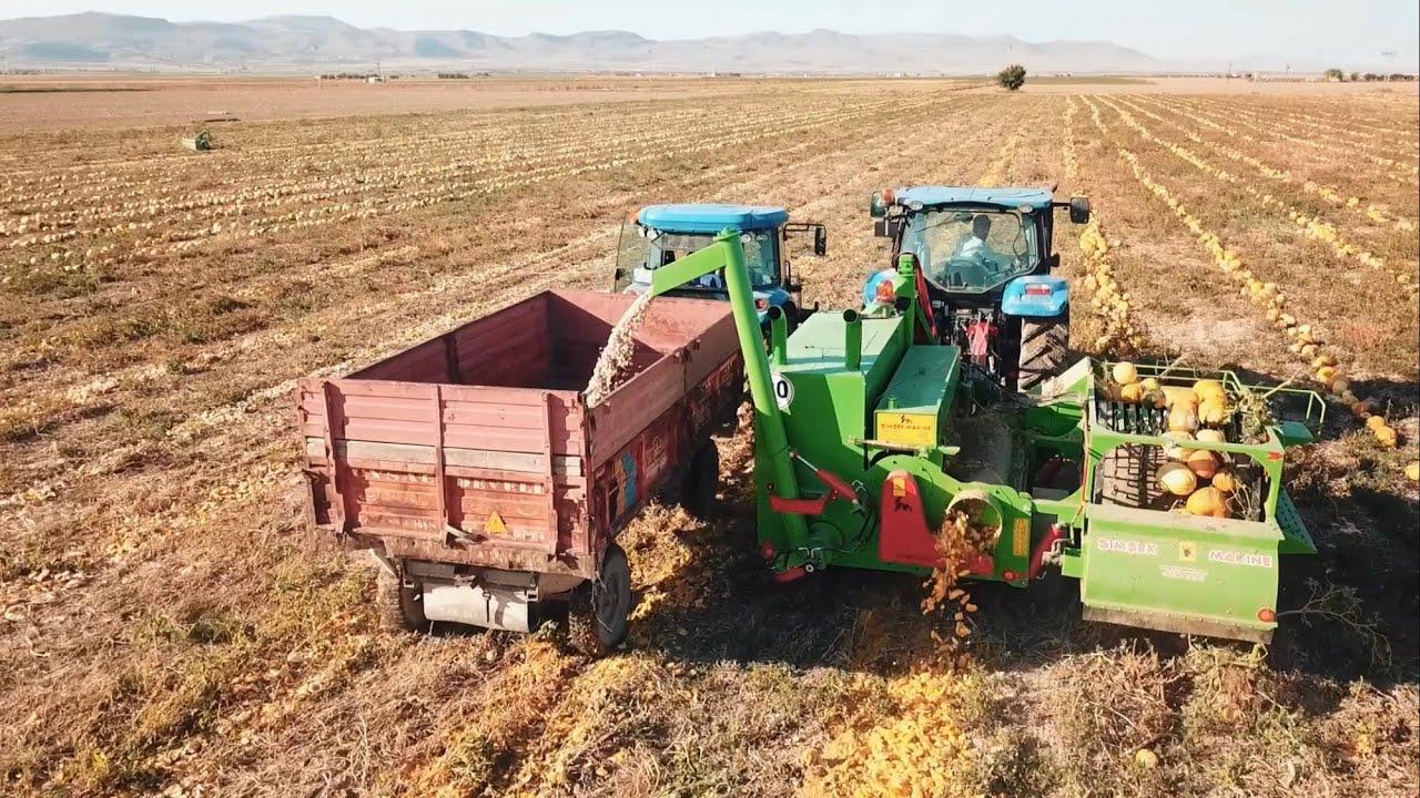 durmadan bosaltmali kabak cekirdegi hasat makinasi