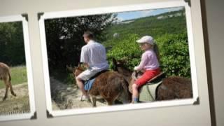 Ферма Чудо-Осликов.(http://travel-family.org/parki/11-chudo-oslik.html - здесь о нашей поездке на ферму