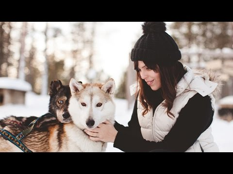 Northern Lights, Reindeer & Huskies in Lapland | WishWishWish