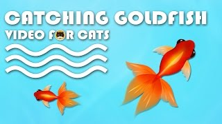 CAT GAMES ON SCREEN - Catching Goldfish! Entertainment Video for Cats to Watch.