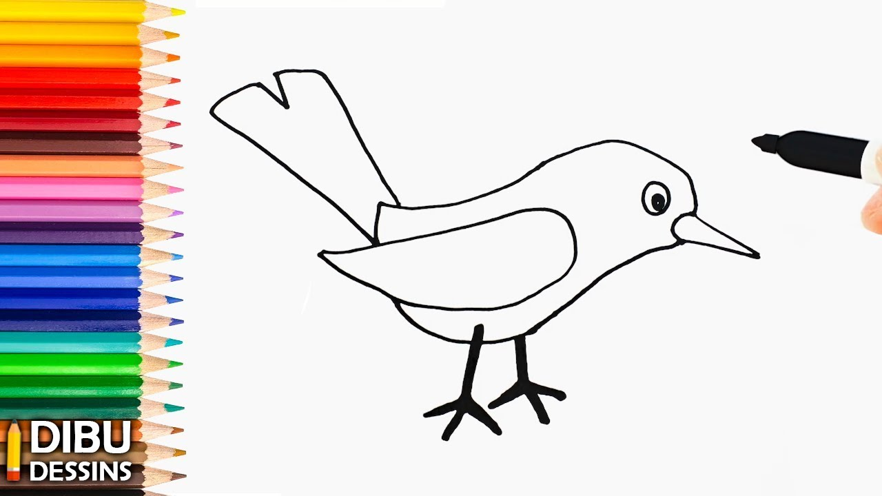 Comment Dessiner Un Oiseau Dessin De Oiseau Tres Facile Youtube
