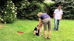 Der Vorführeffekt (mensch-hund-systeme)
