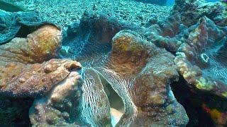 Riesenmuschel (Mördermuschel) - PROTECT THE BLUE PLANET 2 - thumbnail