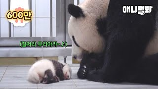 Mother Panda Dearly Looking At Her Sleeping Baby