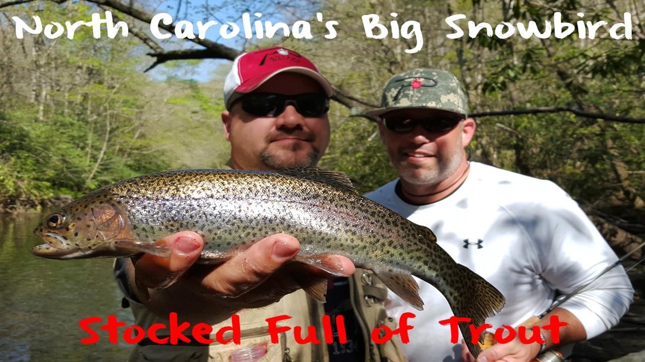 Trout Fishing North Carolina's Big Snowbird Creek