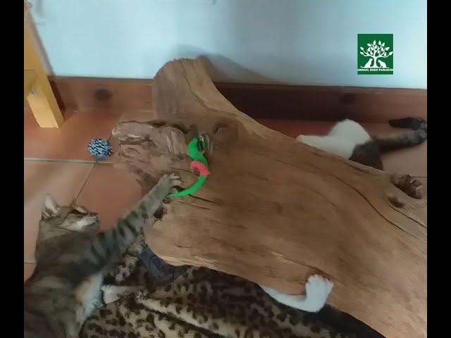 Spiel mit dem Baumstamm, Katzenvilla
