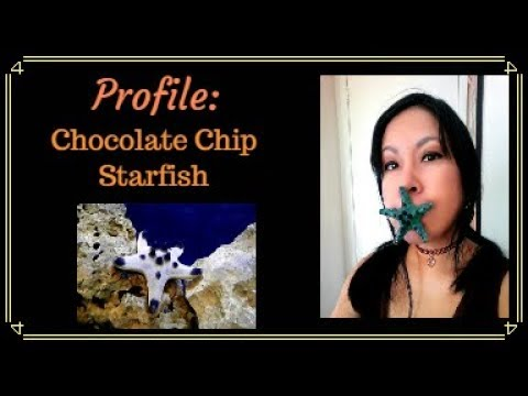 Profile: Chocolate Chip Starfish Care