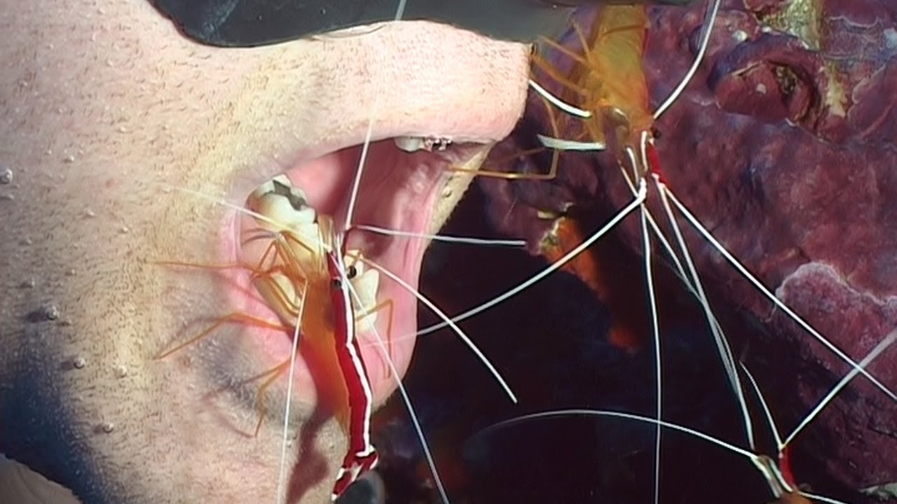 cleaner shrimp and fish relationship