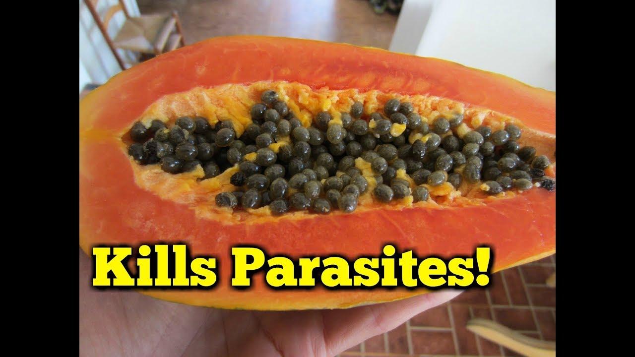 papaya bra för magen