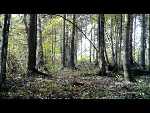 Camera Trap In Latvia With Trail Camera Bolyguard  MG984-36M