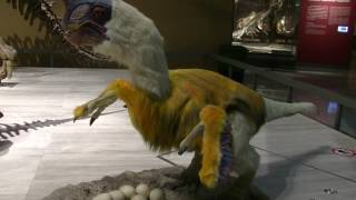<動く恐竜 模型>オヴィラプトル Robotic Oviraptor