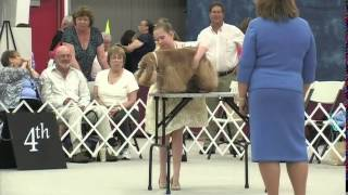 The 2014 Cocker Spaniel National - Jr Showmanship