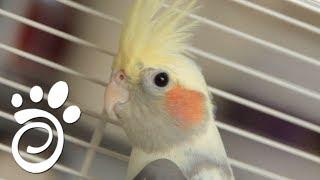 Почему Попугай Кричит. Все О Домашних Животных