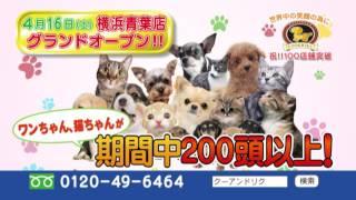 2016年4月16日(土)、ペットショップCoo&RIKU横浜青葉店がグランドオー...