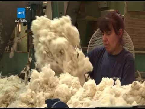 Las ovejas a coches de lujo