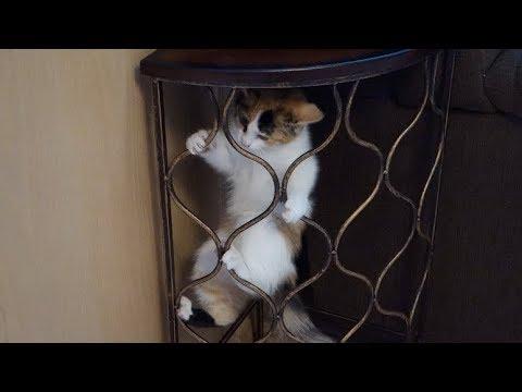 CRAZY Climbing Acrobat Kitten!