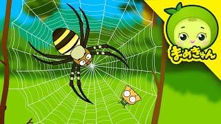 [まめきゅんの昆虫探検#24] クモの巣を脱出!【MAMEKYUNN】 thumbnail