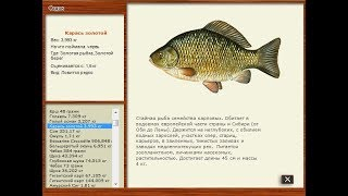 Русская рыбалка 2.4 Золотая рыбка.Карась золотой