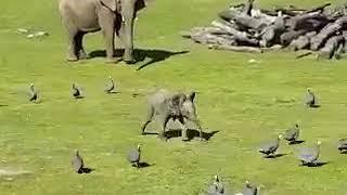 Приколы про слонов