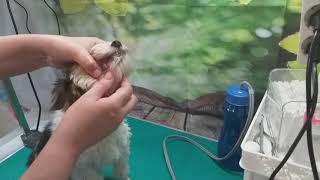 ультразвуковая Чистка Зубного Камня у Собаки