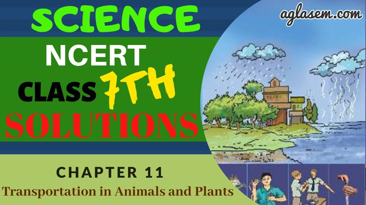 NCERT Solutions Class 7 Science Chapter 11 Transportation ...