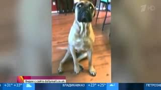 Собака предала своего друга