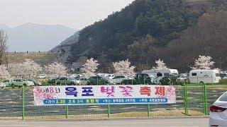 김희진-아름다운것들 (원곡:양희은)배철수 70 80콘서트(배경: 옥포 벚꽃축제)