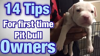 Tips for FIRST TIME Pitbull owners!