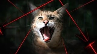 Funny Pets Chasing Laser Pointers Part 1 - Crazy Cats, Crazy Dogs, Funniest Animals, Kitty Cats