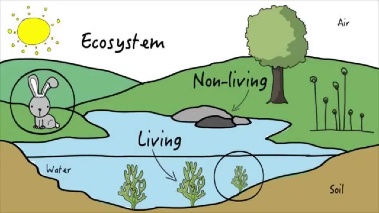 Unit 3: Ecosystems | KLU Science - YouTube