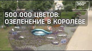В Королеве высадили около 5000 единиц цветочной рассады