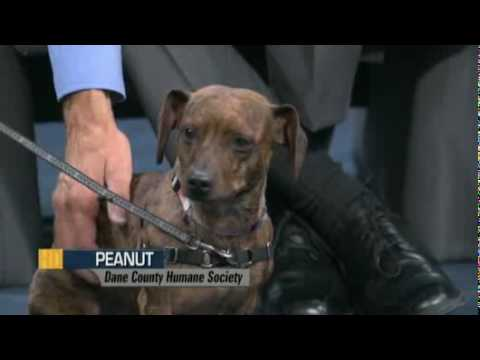 'Pet-entially Yours' With Dane County Humane Society