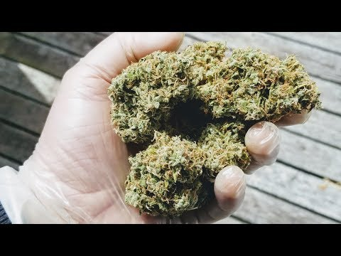 How to dry trim your Cannabis  #3BearsOG