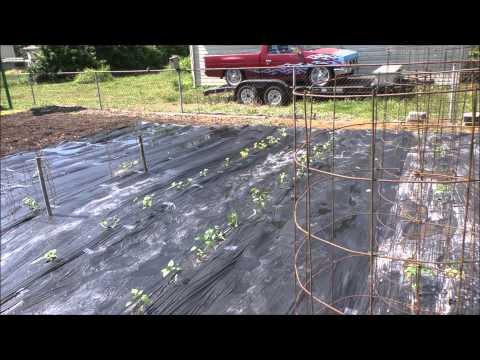 Black Magic Vegetable Garden With Kvusmc