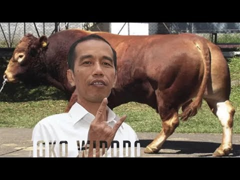 2 SAPI KURBAN SUPER JUMBO PRESIDEN JOKOWI Tahun Ini ( Idhul Adha 1438 H 2017)