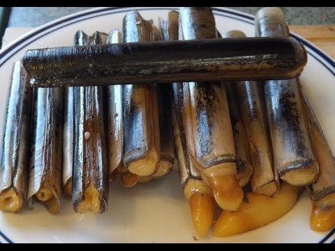 How To Catch And Cook Razor Clams.Seashore To Plate.