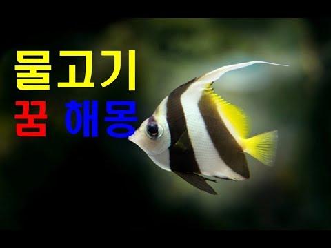 물고기 꿈 해몽